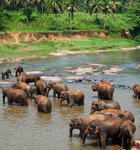 Sri Lanka - Circuit Merveilles du Sri Lanka