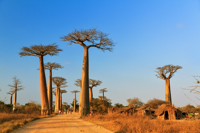 Splendeurs de Madagascar 15J/12N - 2018 - voyage  - sejour