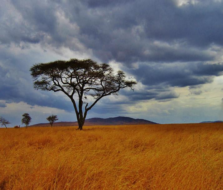 Combiné Tanzanie Zanzibar | Safari et rencontres en pays Massaï