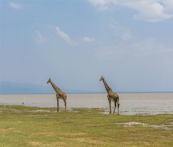 Voyage de noces Tanzanie   Safari et plage de rêve en duo
