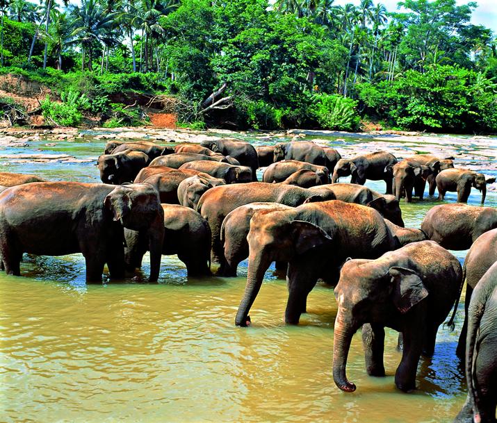 Circuit Sri Lanka | Au Pays des Éléphants