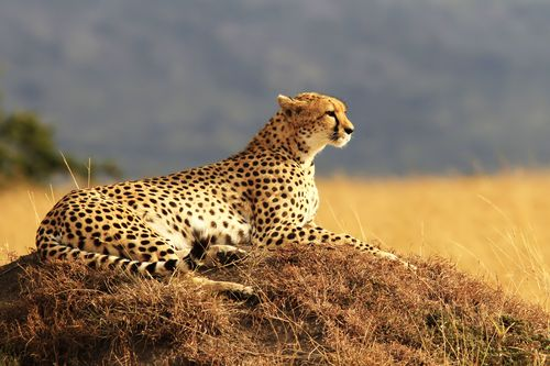 Kenya - Circuit Splendeurs du Kenya