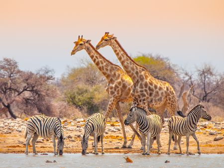 Circuit splendeurs de namibie 3*