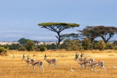 Merveilles de Tanzanie 10J/07N - 2021