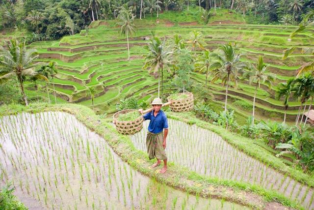 Splendeurs d'Indonésie & des Célèbes 15J/12N - 2018 - voyage  - sejour