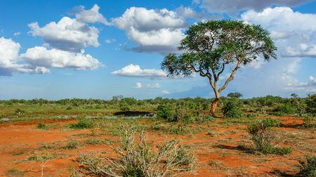 Kenya - Circuit Explorations du Kenya avec extension Plage de Tiwi
