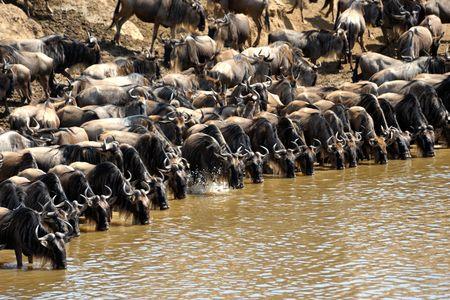 Circuit Explorations du Kenya 100% Safari - 1