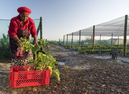 Afrique du Sud - Swaziland-Eswatini - Circuit Splendeurs d'Afrique du Sud