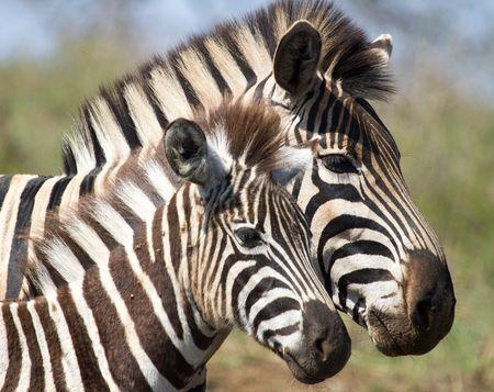 Afrique du Sud - Swaziland-Eswatini - Zimbabwe - Circuit Splendeurs d'Afrique du Sud et extension Chutes Victoria