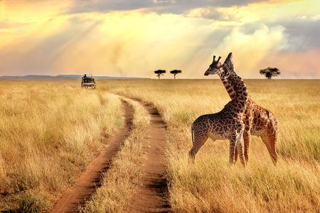 Offre - Destination : Kenya