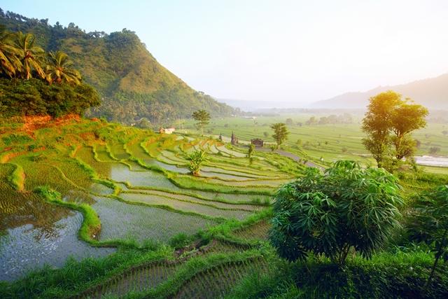 Offre - Destination : Indonésie