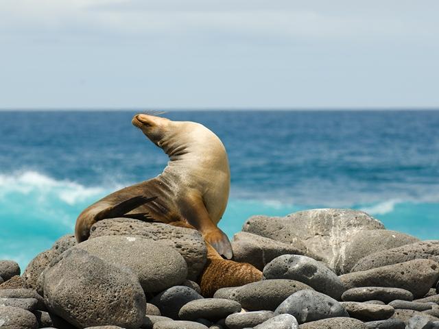 Splendeurs de l'Equateur & Extension Galapagos Croisière - voyage  - sejour