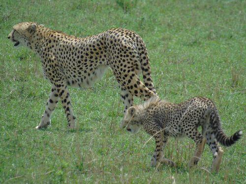 Merveilles du Kenya 10J/7N - 2018 - voyage  - sejour