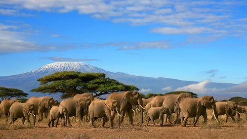 Splendeurs du Kenya 11J/8N - Eté 2018 - voyage  - sejour