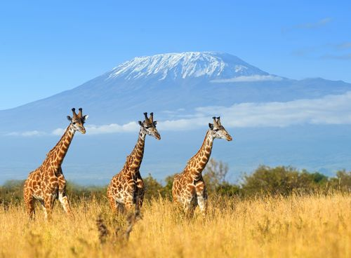 Merveilles du Kenya 11J/8N - Eté 2018 - voyage  - sejour