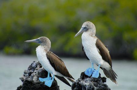 Splendeurs de l'Equateur & Extension Galapagos Terrestre 16J/14N - 2019