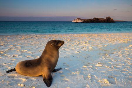 Splendeurs de l'Equateur & Extension Galapagos Croisière 17J/15N - 2019