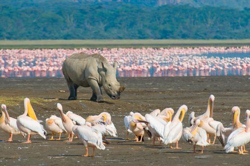 Merveilles du Kenya 10J/7N - 2019